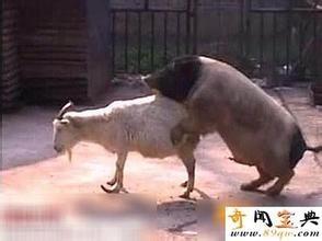 女人与公动物交配文章_受精过程 精子与放射冠 动物交配 自交 杂交 【高中生物微课】