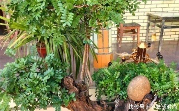 """这3种""""不起眼""""的树,能散发浓郁香味,养成老桩盆景,2万都不卖"""